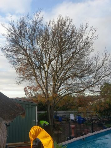 Adelaide Hills Tree Services, Project Gallery