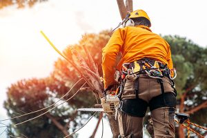 Tree Pruning Services Adelaide Hills