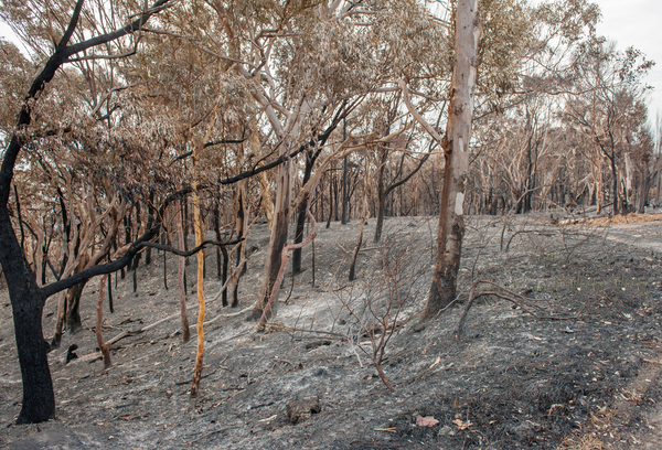 Burnt out bush after the recent fires in the Adelaide Hills