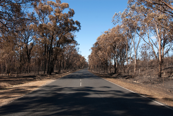 Burnt road side in the Adelaide Hills showing damaged trees