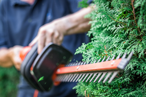 How to maintain a hedge from home