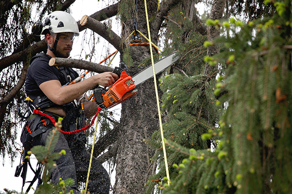 Adealdie Hills Tree Maintenance Services