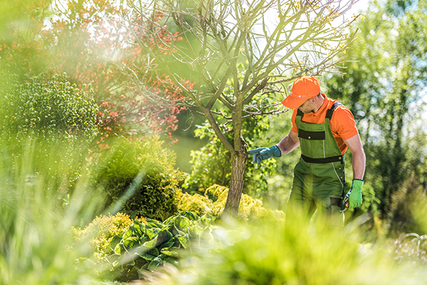 Adelaide Hills Tree Removal Services