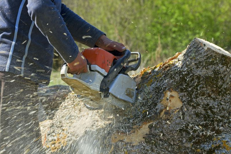 Mount Barker Tree and Stump Removal