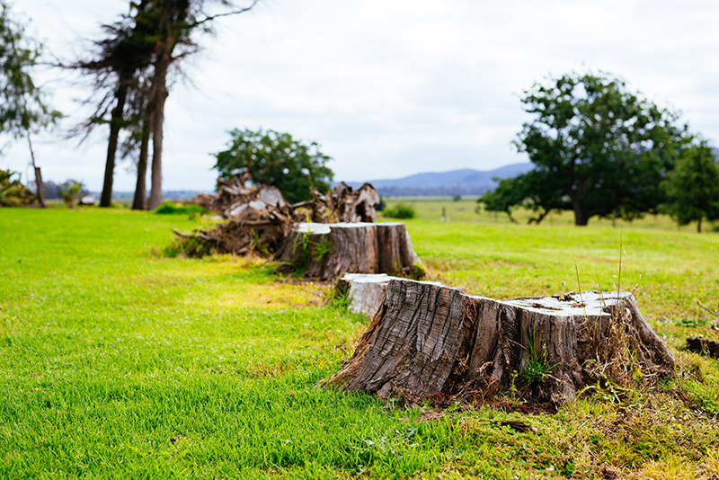 Stump Grinding Services in the Adelaide Hills