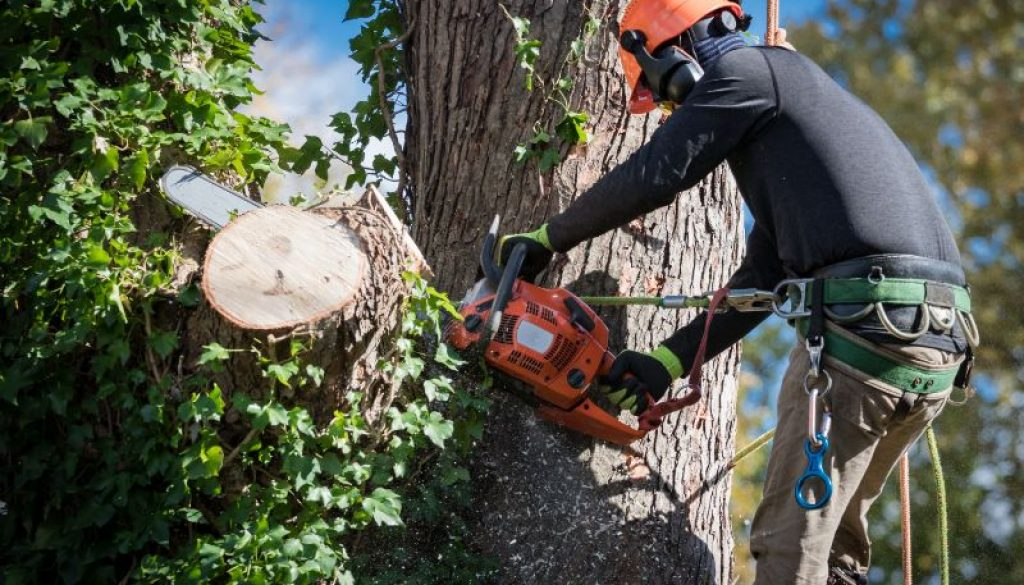 Tree Removal in the Adelaide Hills
