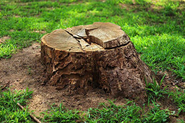 Large Stump Removal Services in the Adelaide Hills