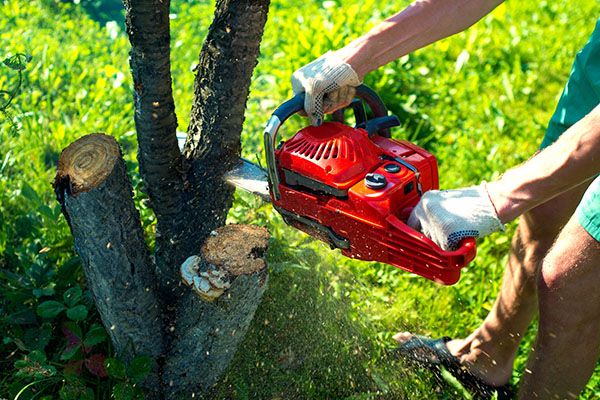 Tree stump removal in Mount Barker