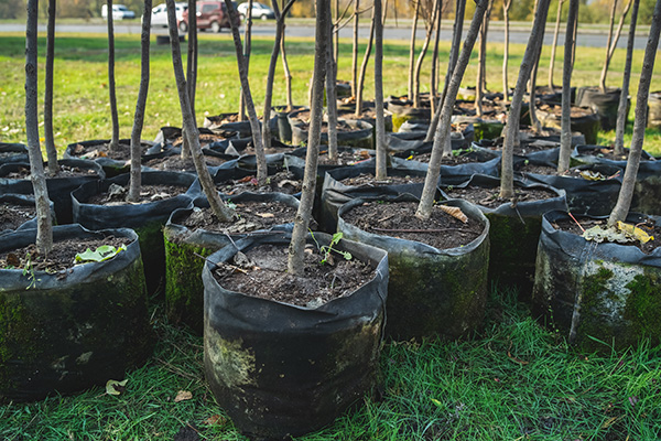 Adelaide Hills Tree Services Plants Ten New Trees for Every One Removed